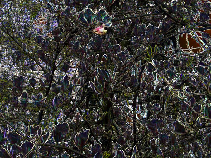 Hortus (Magnolia)  (2013)
