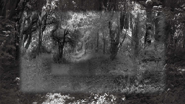 Forest Paths (forget Heidegger)